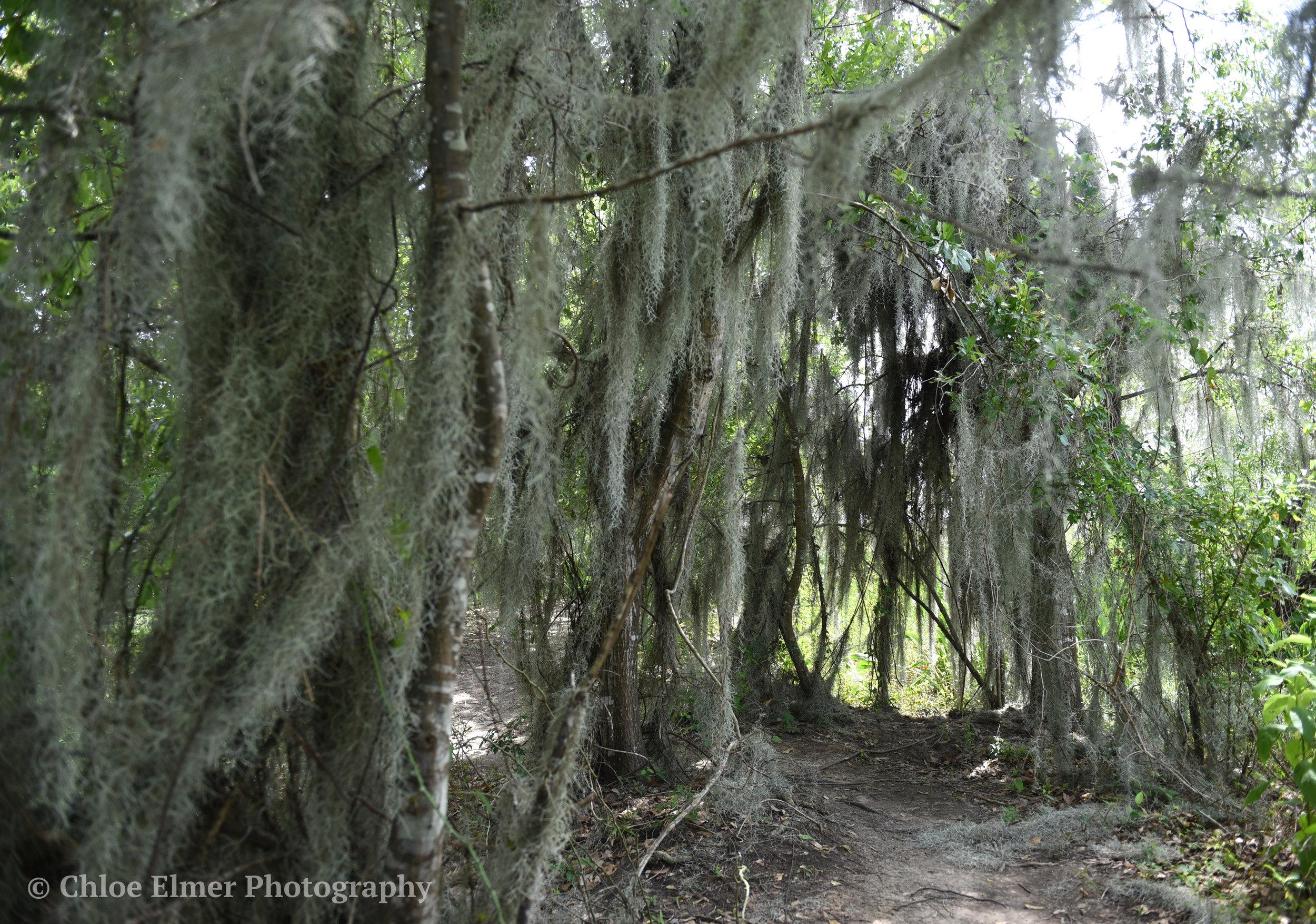 swamp4.JPG