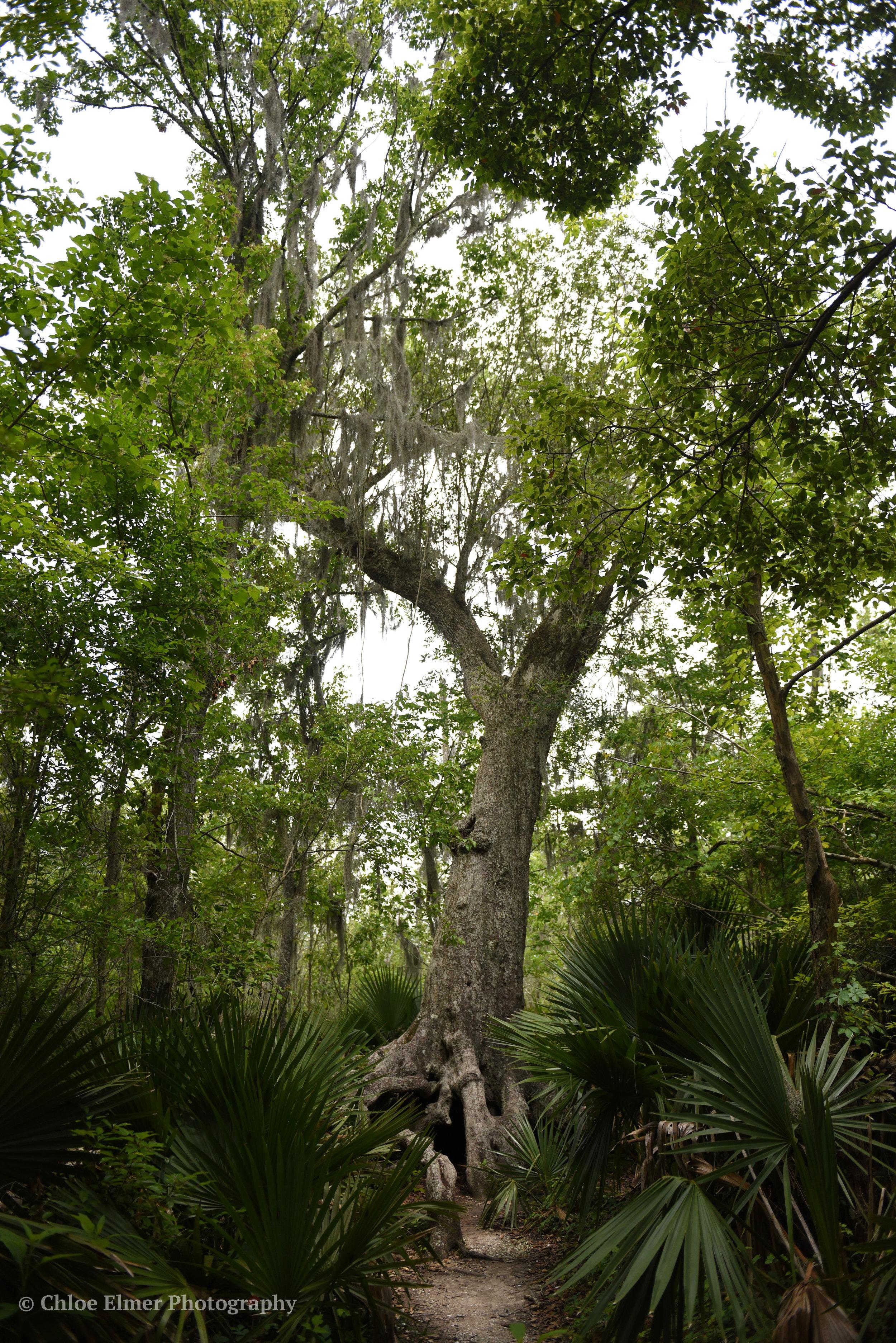 swamp14.JPG