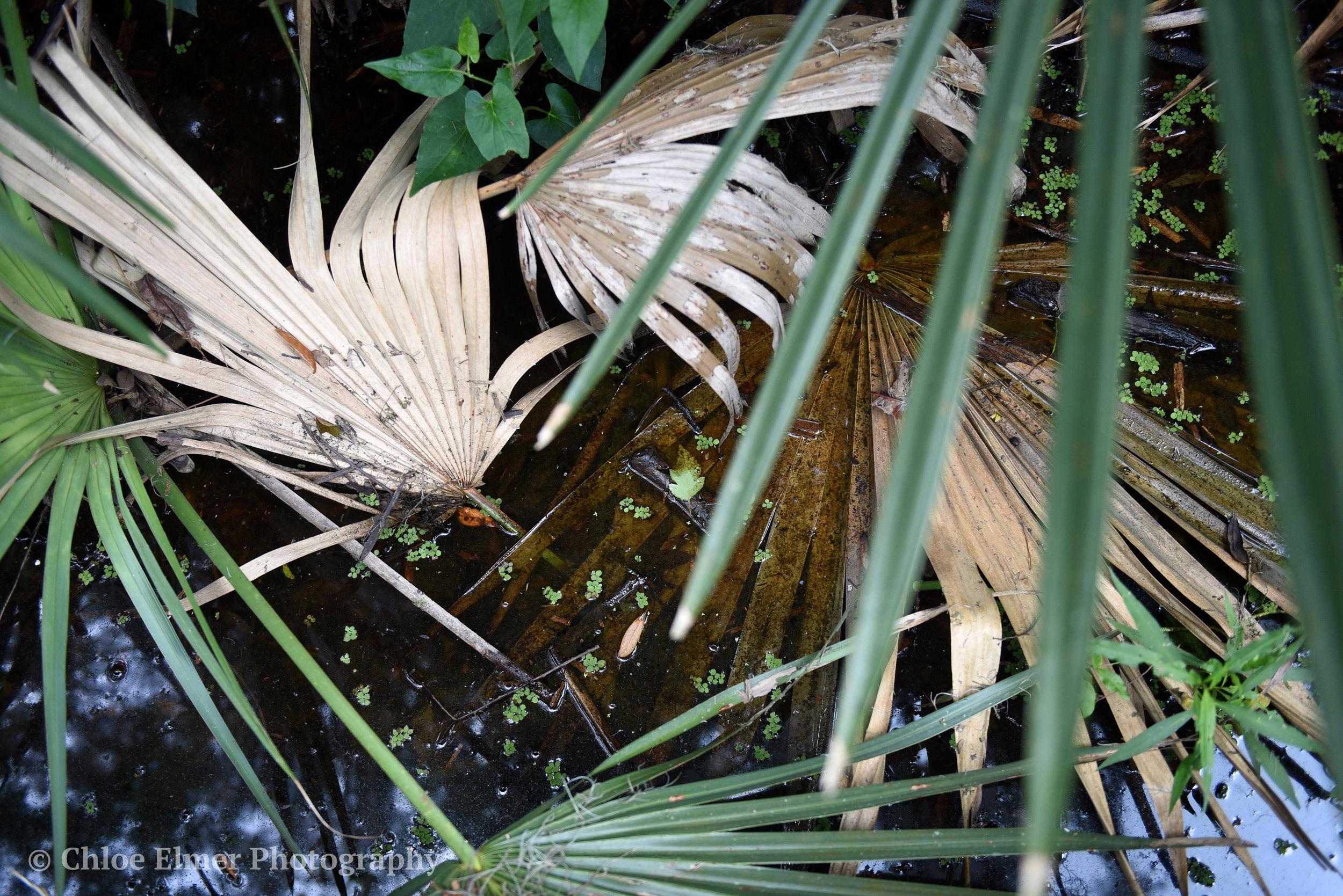 swamp17.JPG
