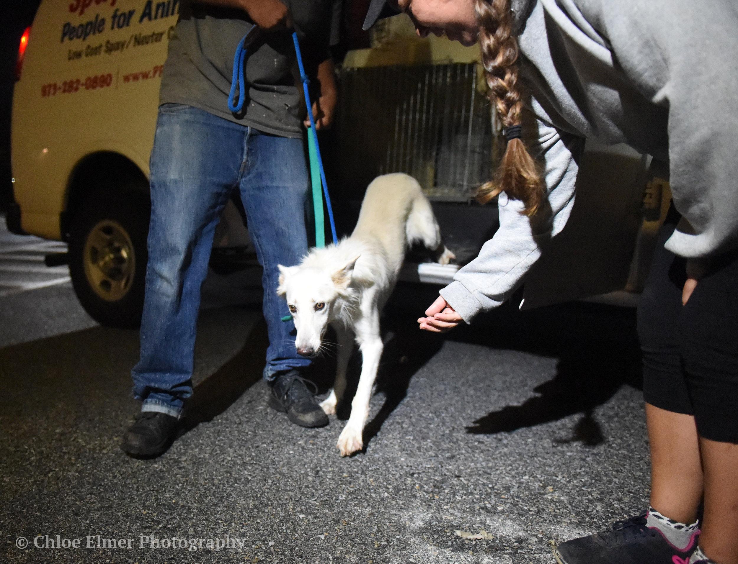 090617 Harvey Dogs Arrival WC 06.JPG