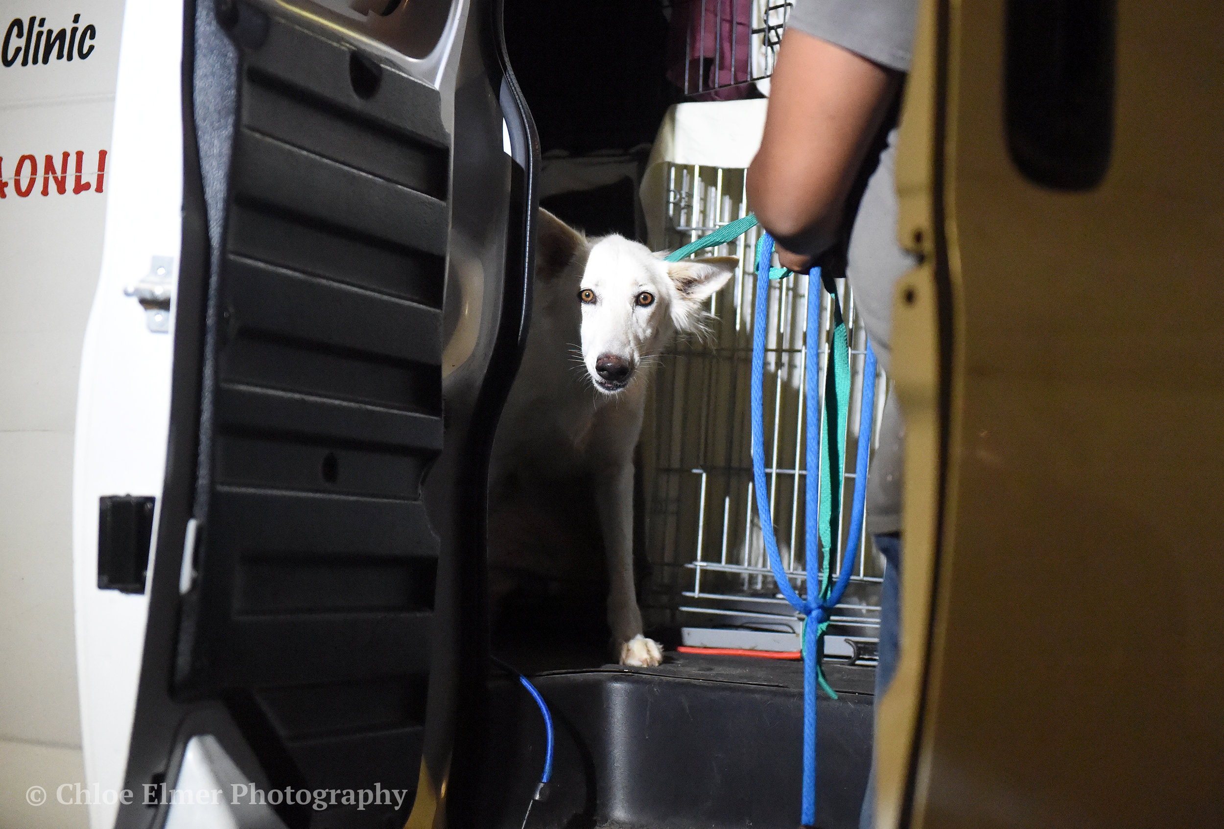 090617 Harvey Dogs Arrival WC 05.JPG