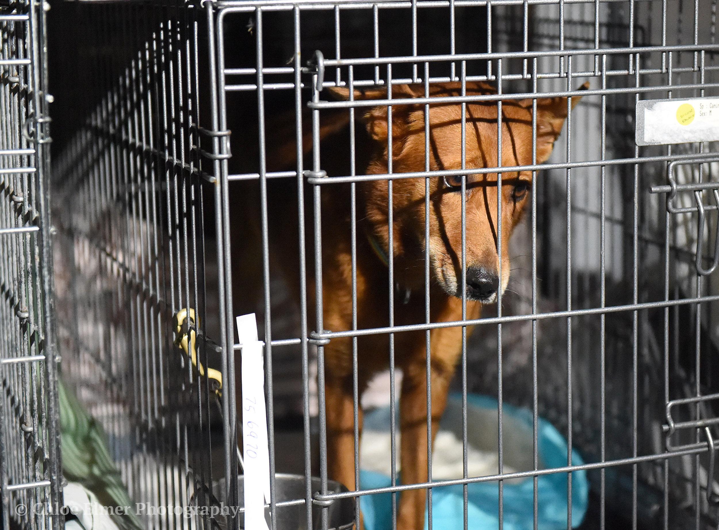 090617 Harvey Dogs Arrival WC 10.JPG