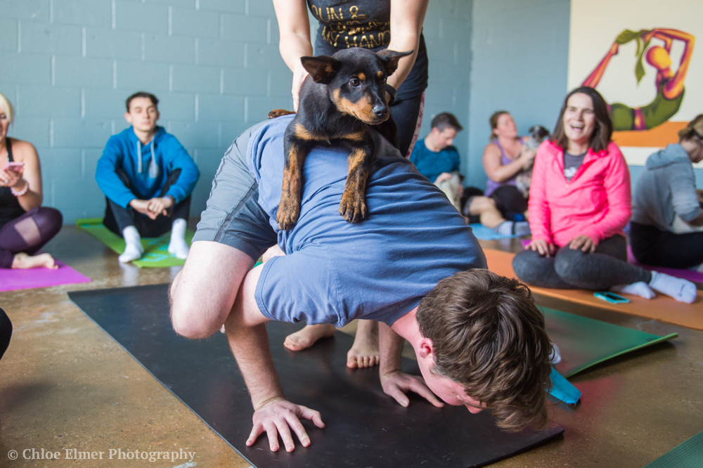 030418 SPCA puppy yoga 02.JPG
