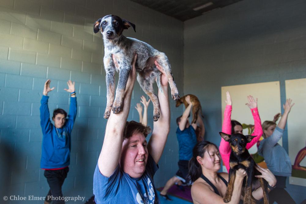 030418 SPCA puppy yoga 03.JPG