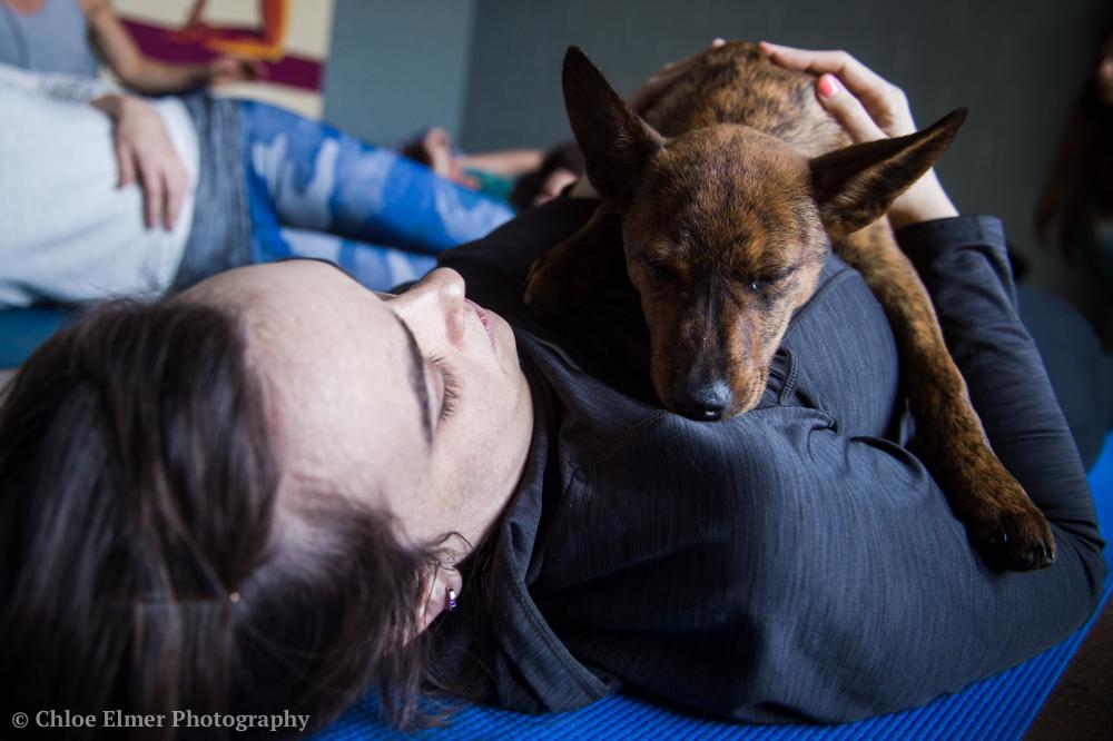 030418 SPCA puppy yoga 20.JPG