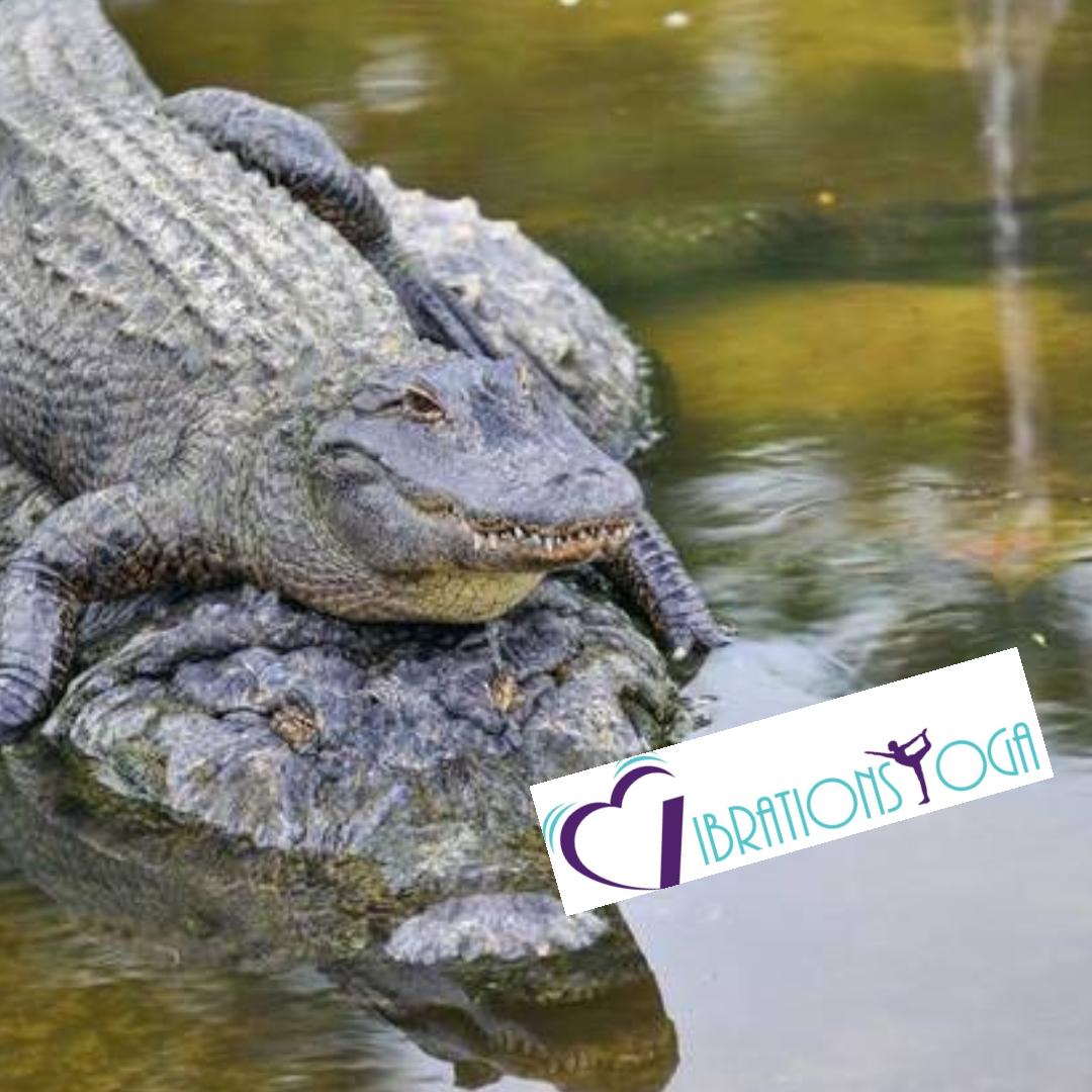 gatorback.png
