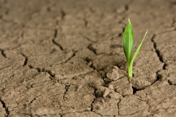 Hope plant growing in the desert-570x379.jpg