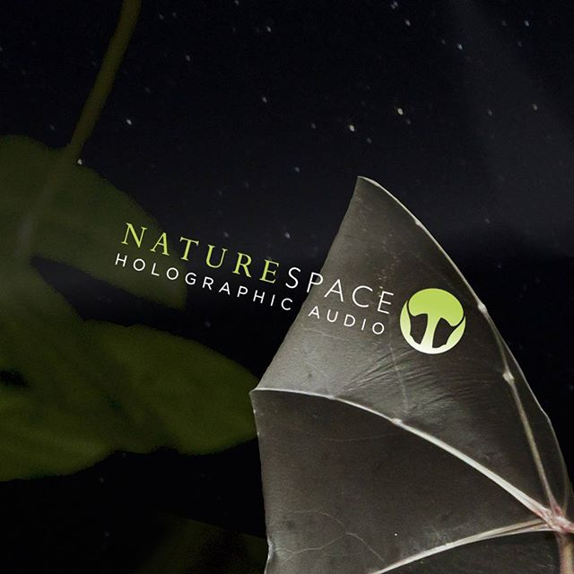 Our first Track of the Month, Echolocation, is now available in the Naturespace store! #bats #naturespace  #echolocation