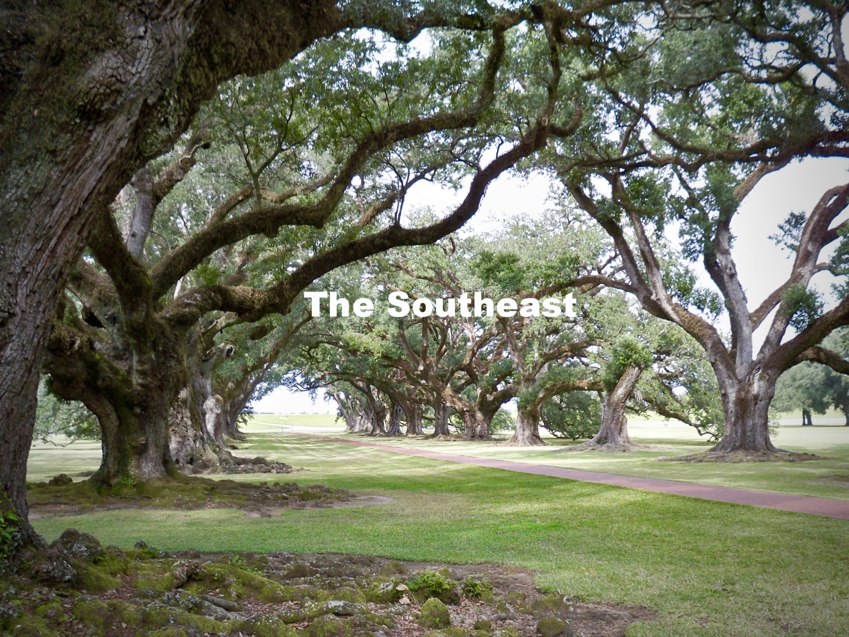 Live Oaks, Louisiana