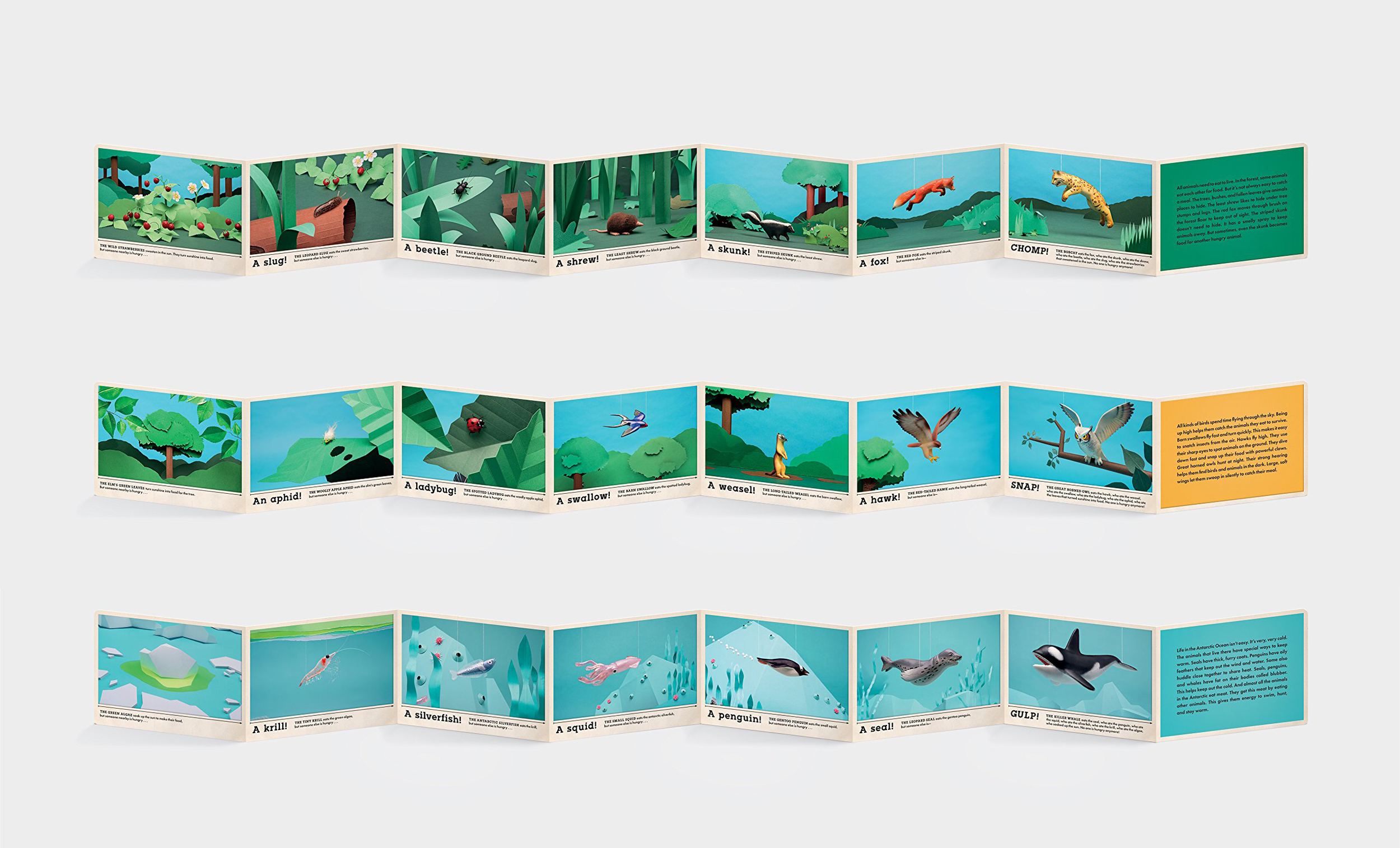 THE ACCORDION-STYLE-FOLDOUT BOOKS, UNFOLDED