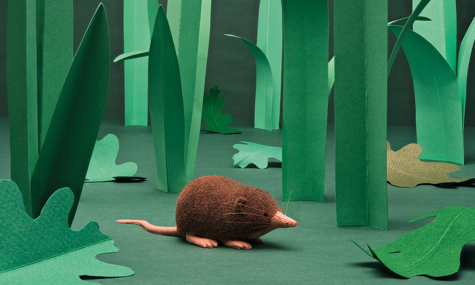 THE LEAST SHREW IS OUR MOST FAVOURITE