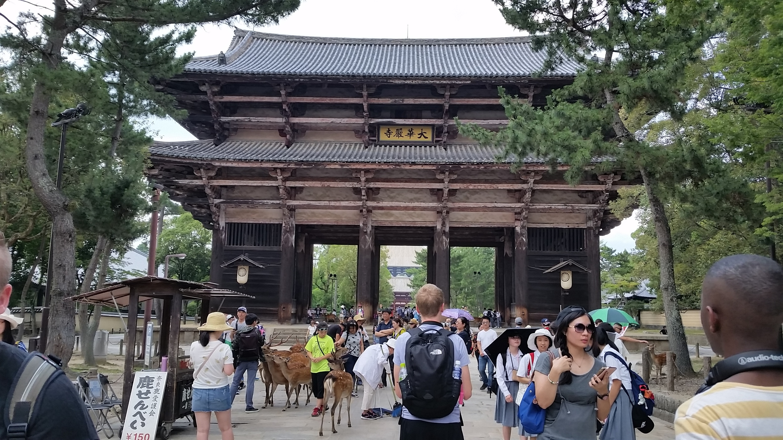 Heading to Toudaiji Temple in Nara and seeing many deer along the way