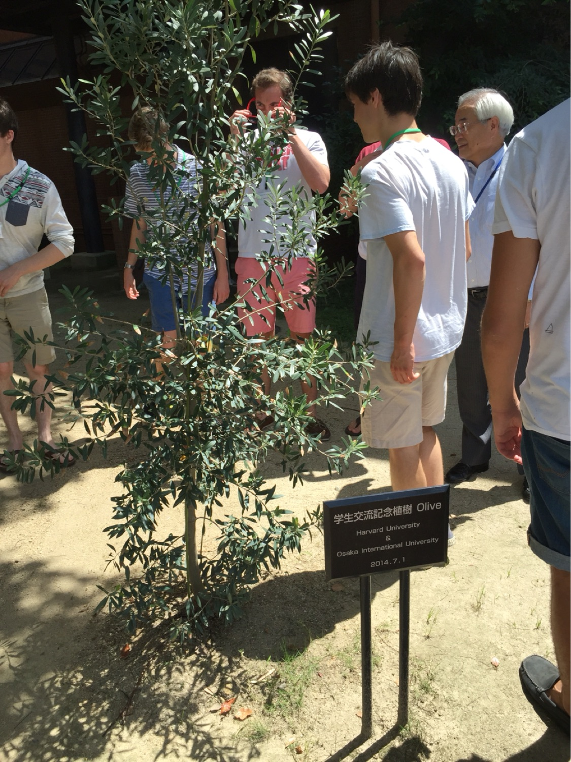 At Osaka International University, visiting a tree planted with the Dins on our last tour in 2014