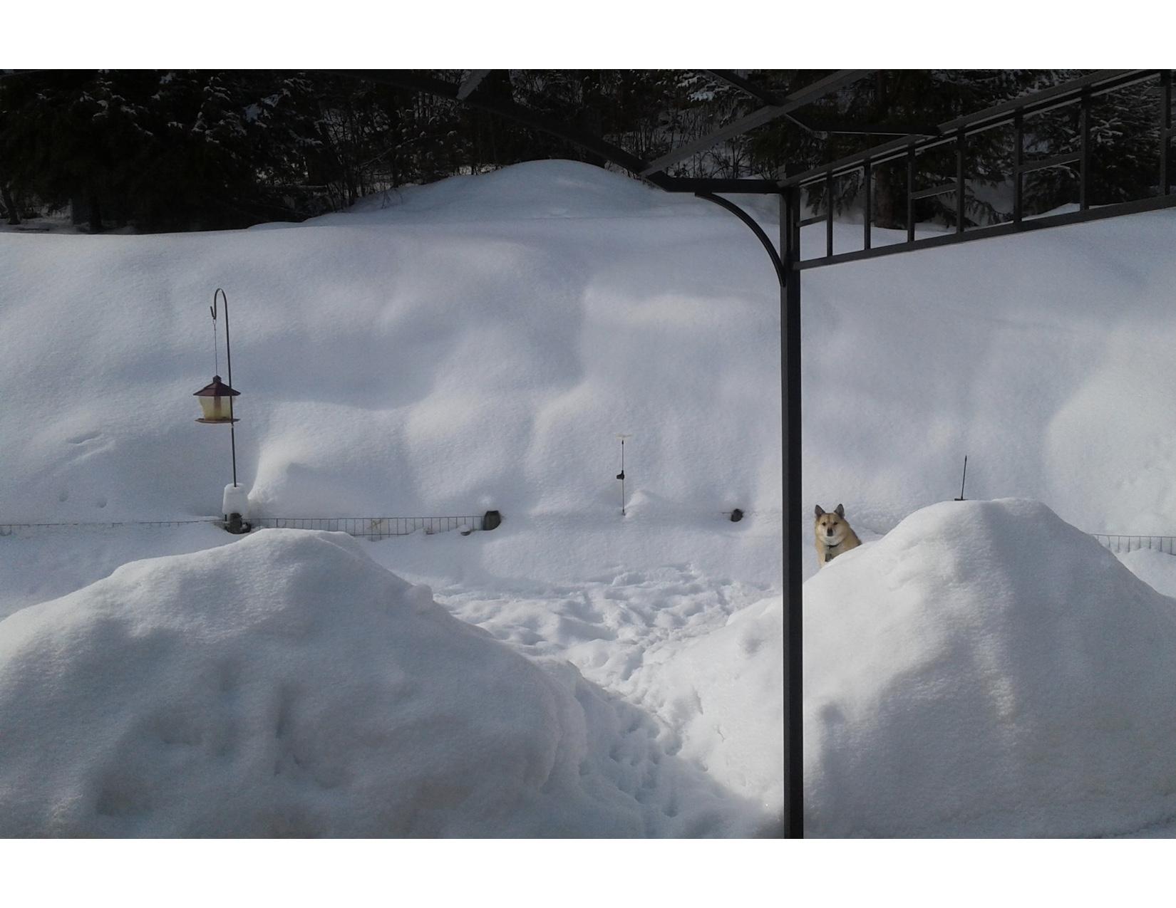 dog and snow (3).jpg