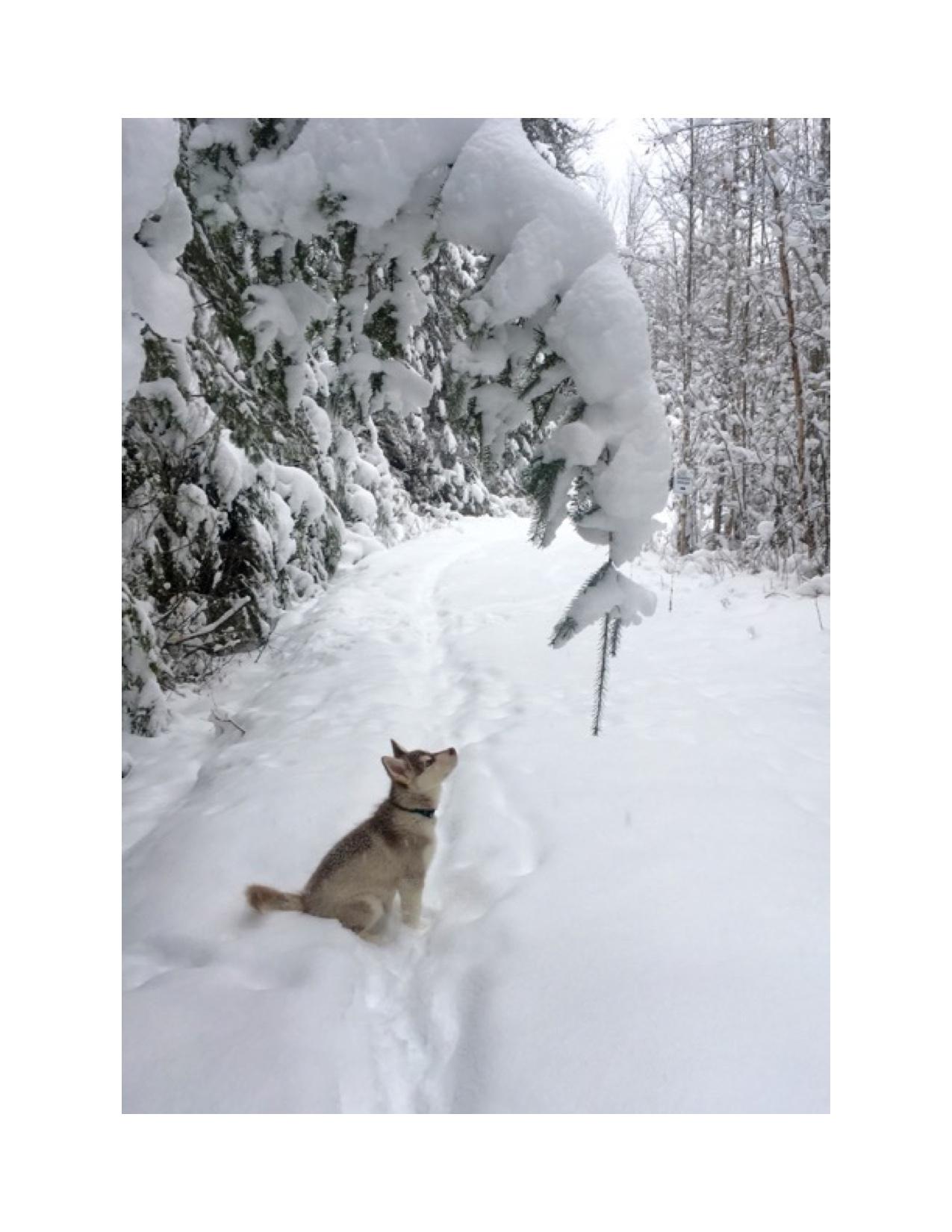 mocha and winter (3).jpg