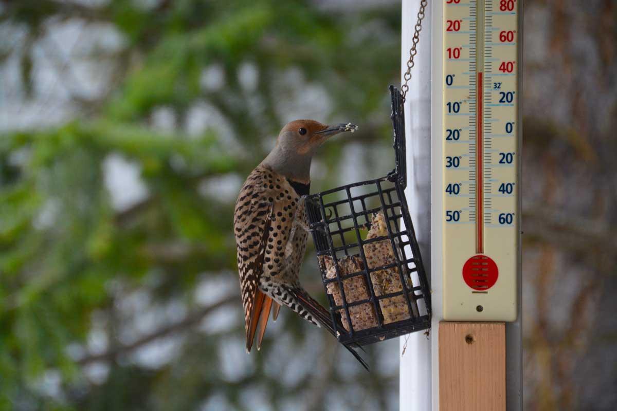 Bird-june-web.jpg