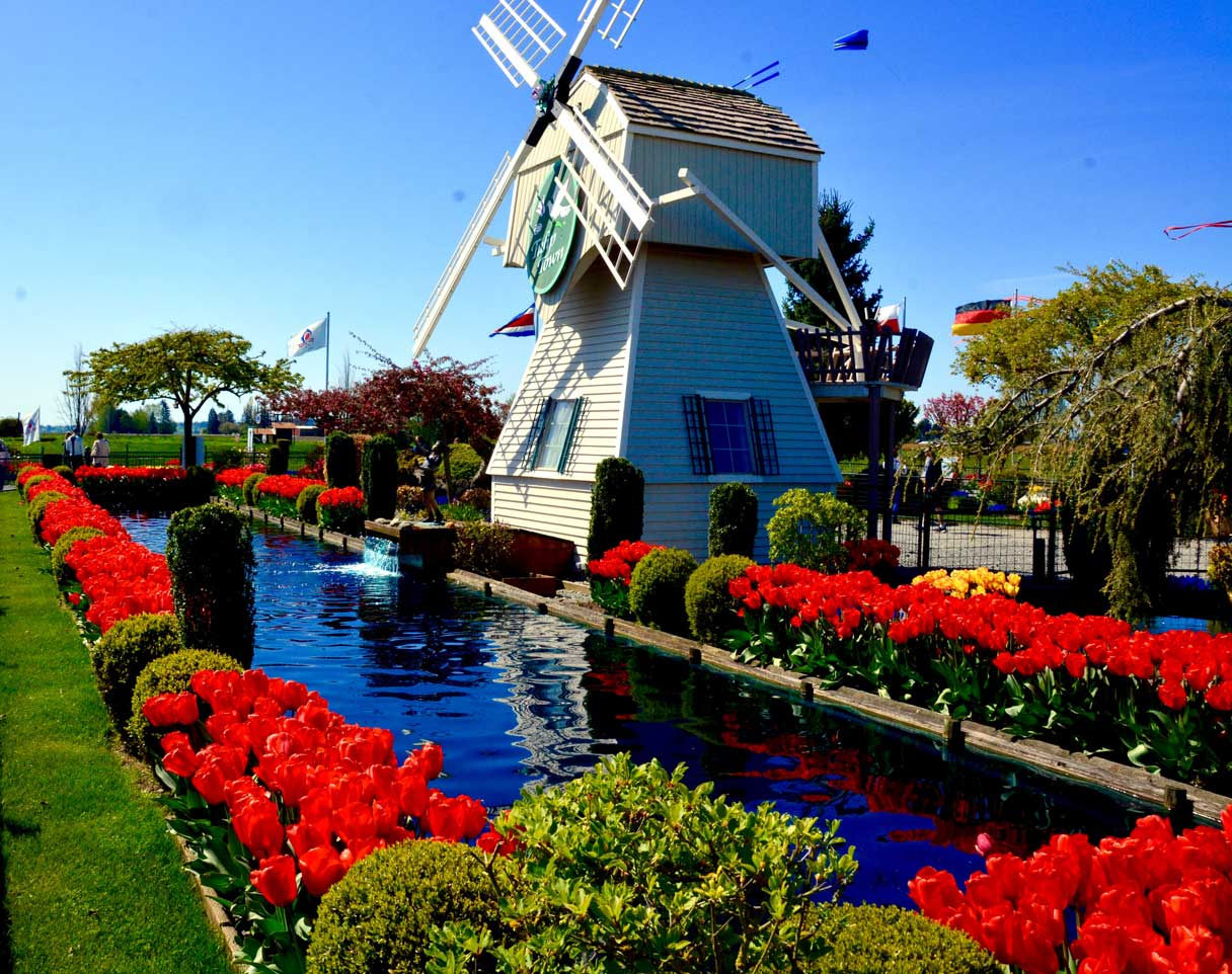 Windmill-june-web.jpg