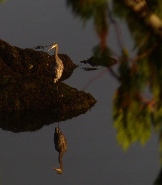 Bird-in-water-june.jpg