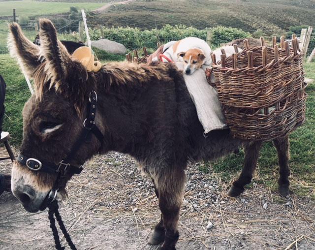 donkey and friend.jpg