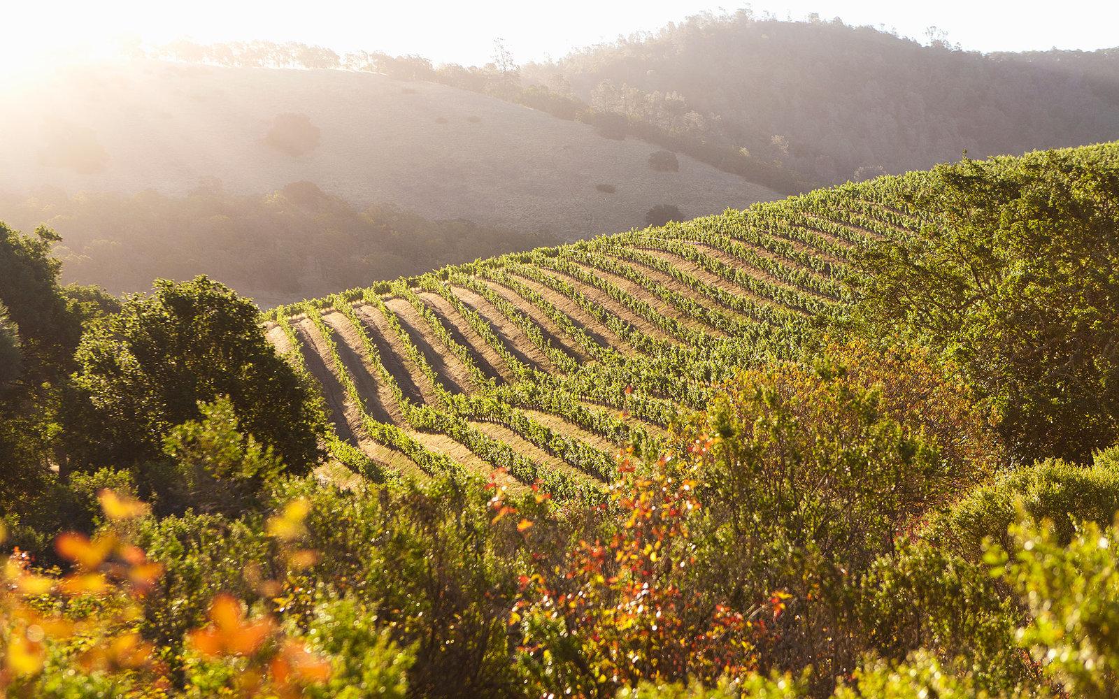 Wine-Searcher - WINE REPORTING