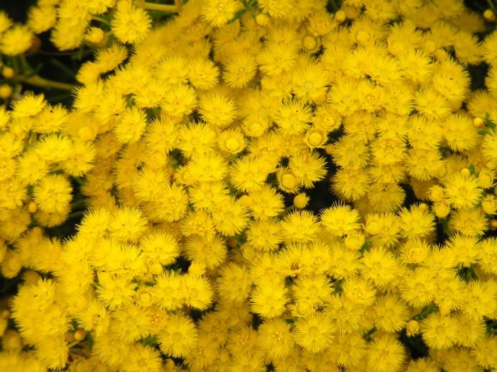 Feather Flower.jpg