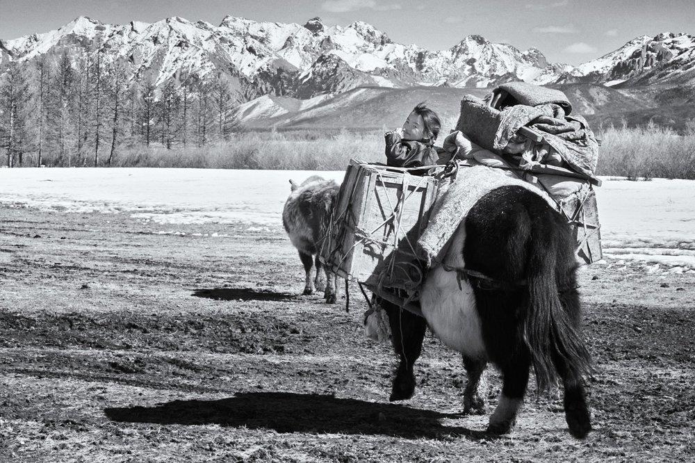 Khasar_S_Migration_VIII_Huvsgul_Mongolia_Spring_2014+2.jpg