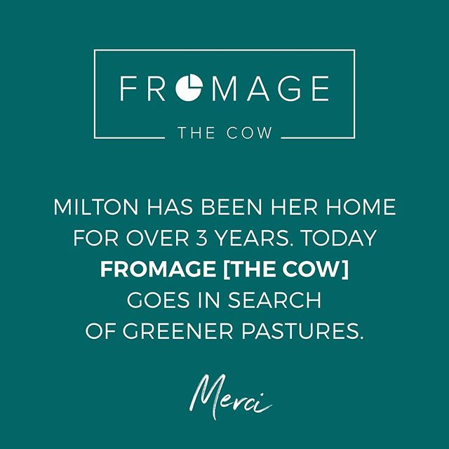 It may sound CHEESY, but we are really GRATEful 🐮🧀... #fromage #fromagethecow #greenerpastures #thankyou