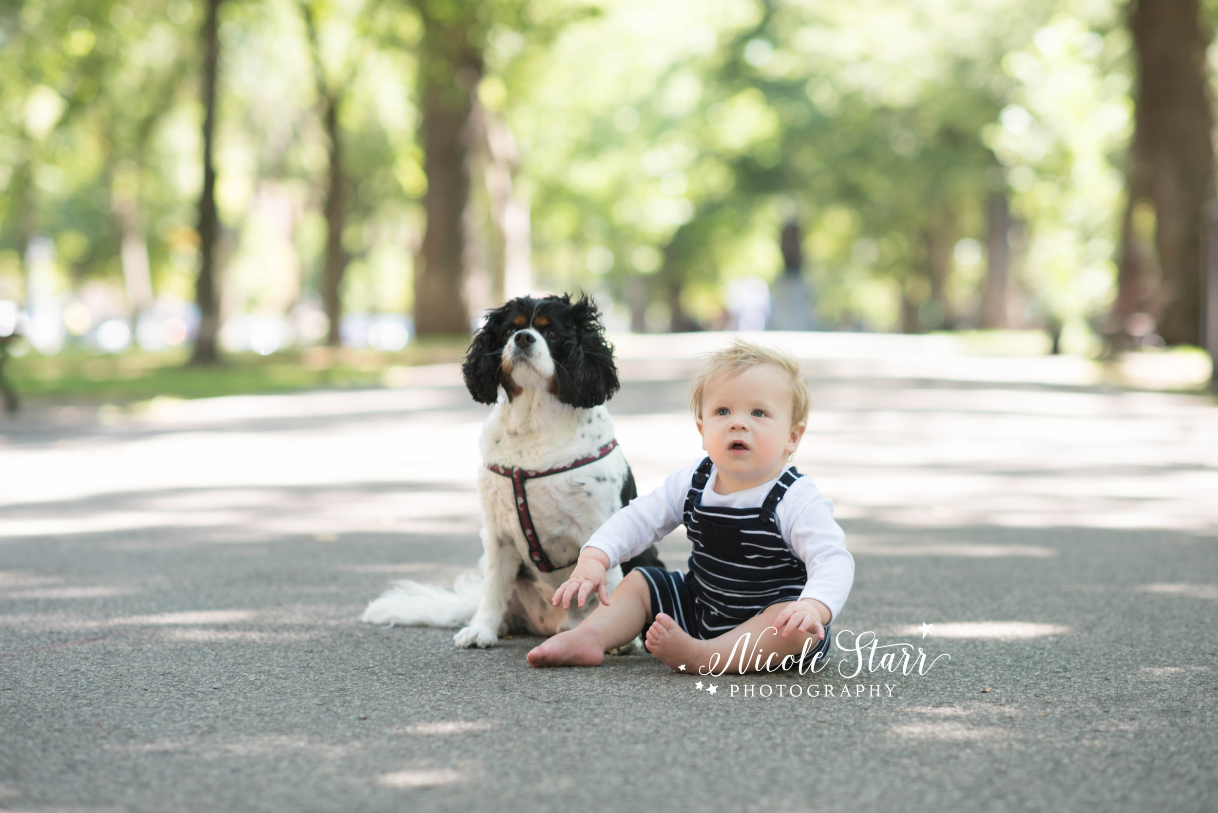 boston family photographer baby and dog.jpg