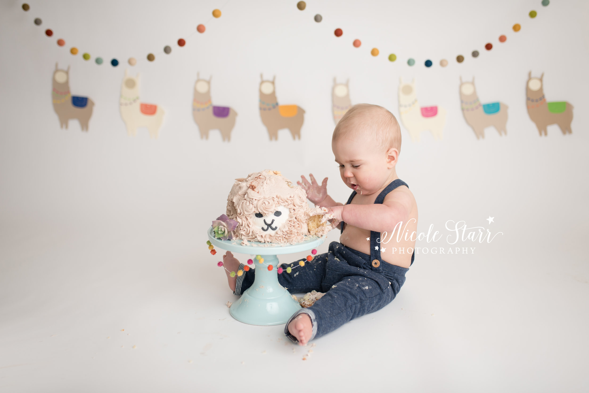 llama cake smash, nicole starr photography, saratoga springs cake smash photographer-6.jpg