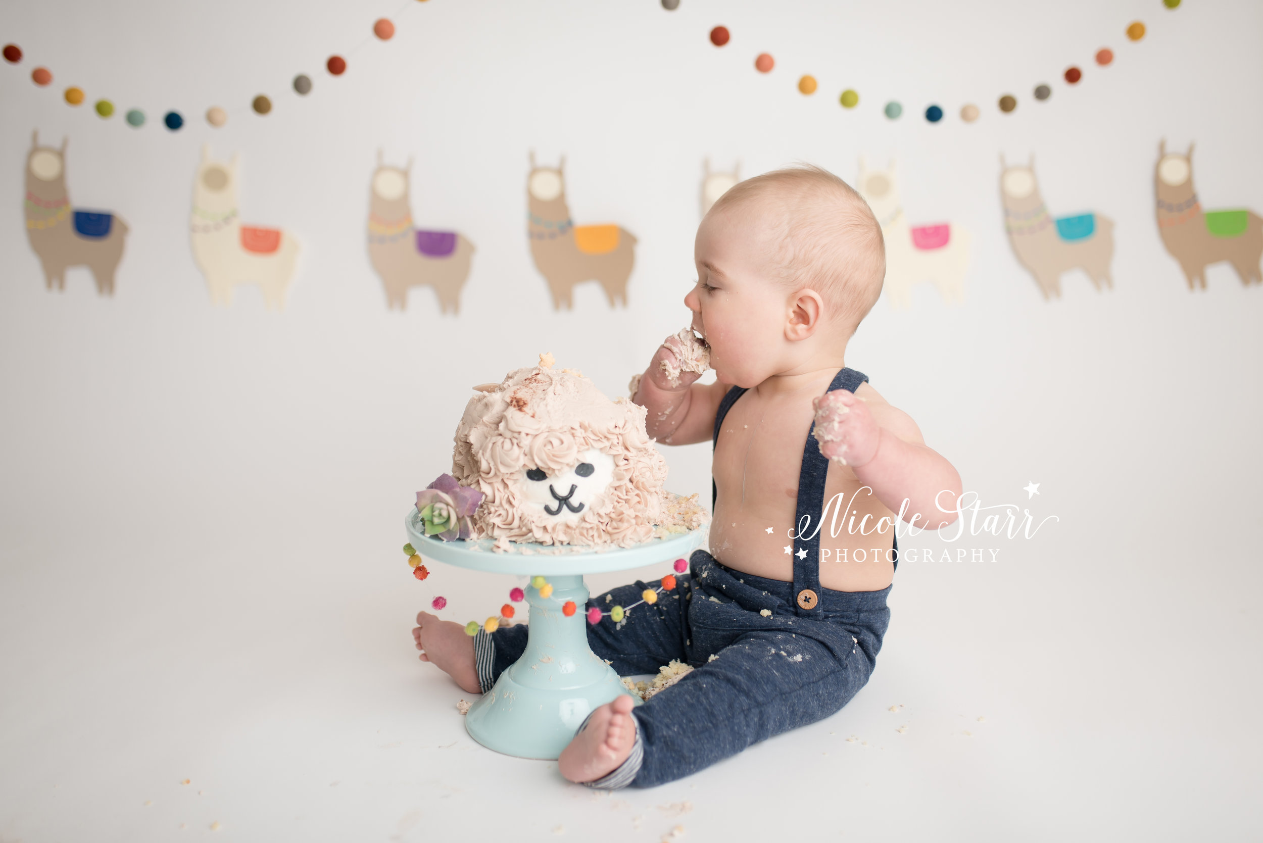 llama cake smash, nicole starr photography, saratoga springs cake smash photographer-8.jpg