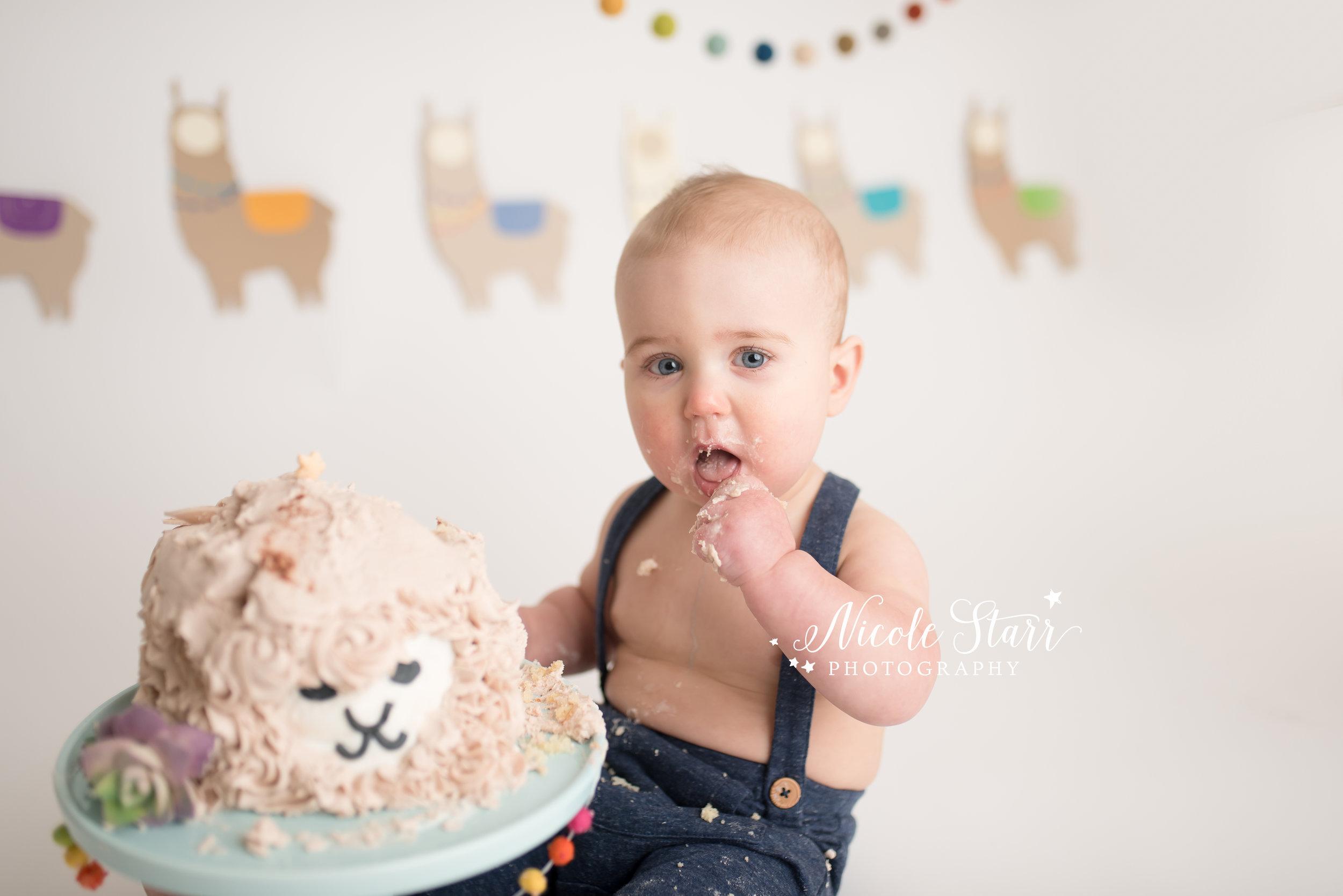 llama cake smash, nicole starr photography, saratoga springs cake smash photographer-9.jpg