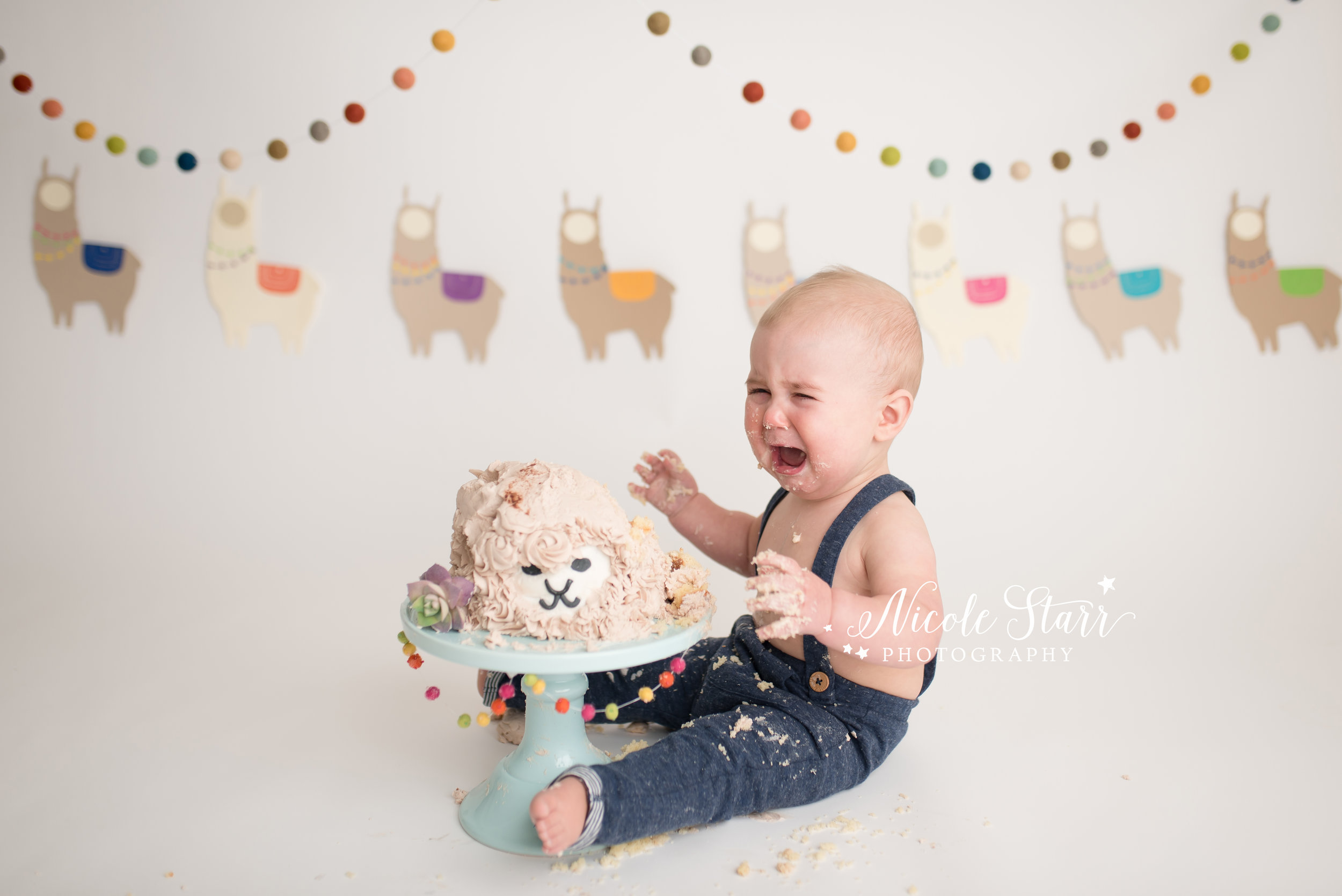 llama cake smash, nicole starr photography, saratoga springs cake smash photographer-15.jpg