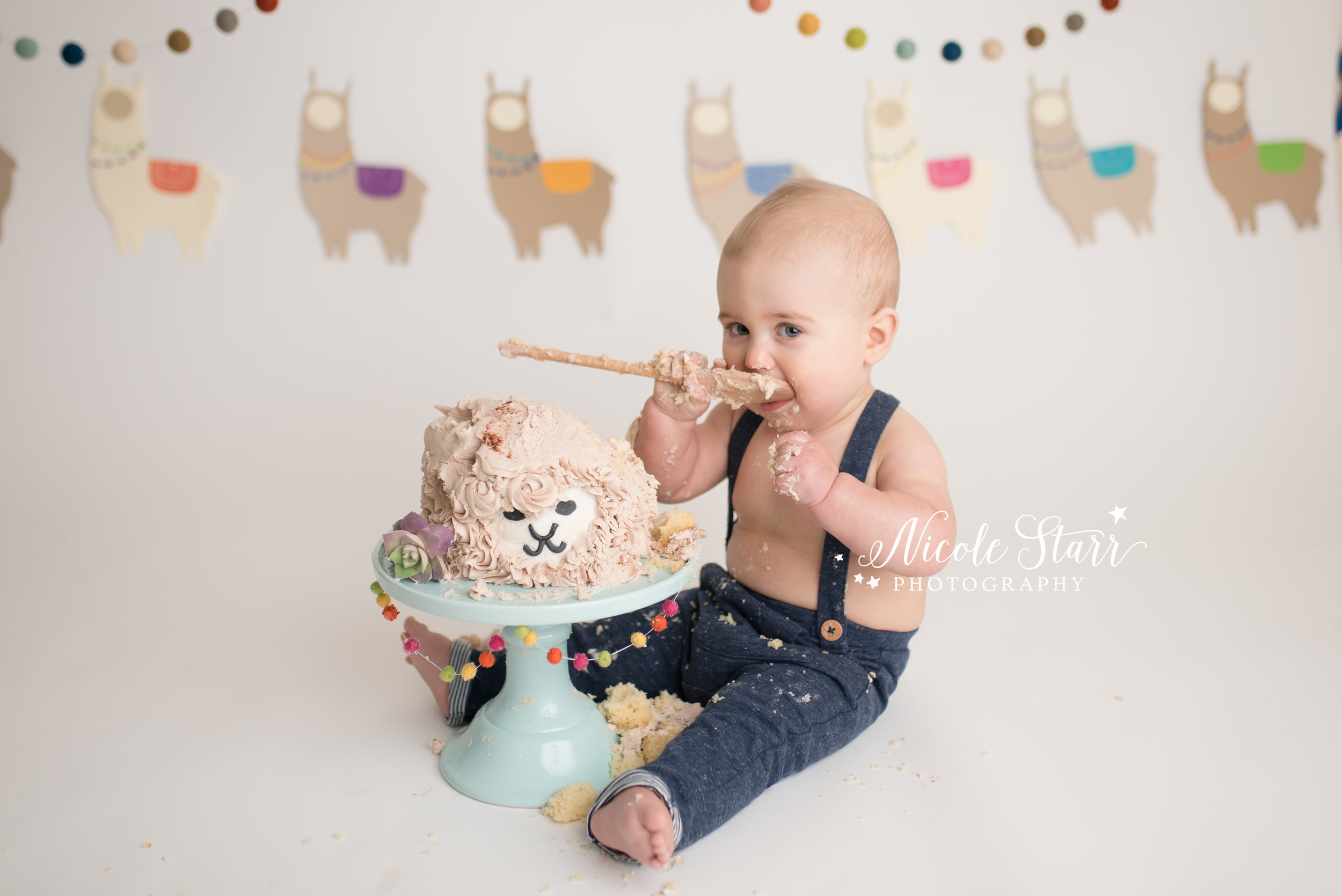llama cake smash, nicole starr photography, saratoga springs cake smash photographer-14.jpg