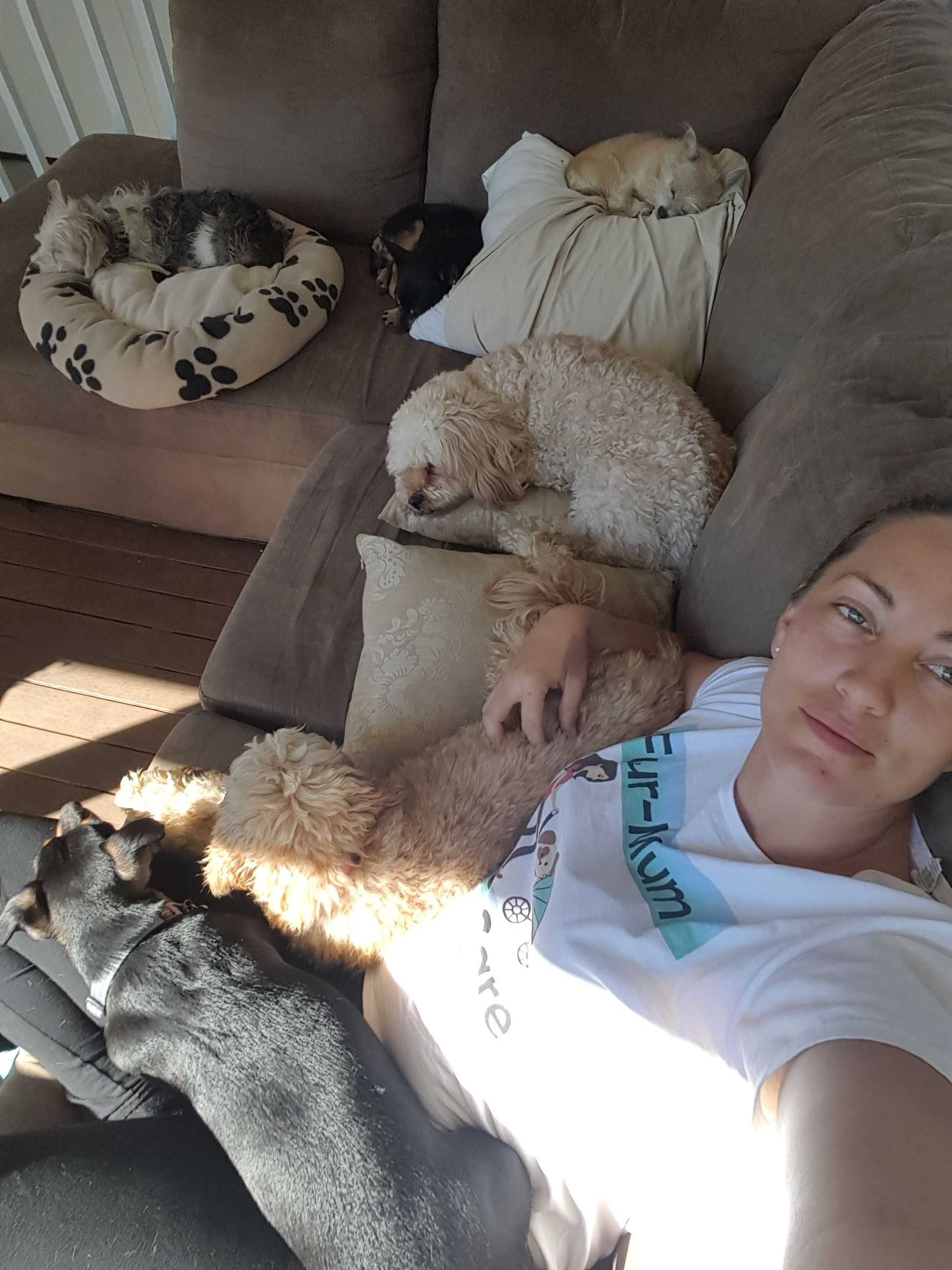 Several dogs enjoy an afternoon nap on the couch