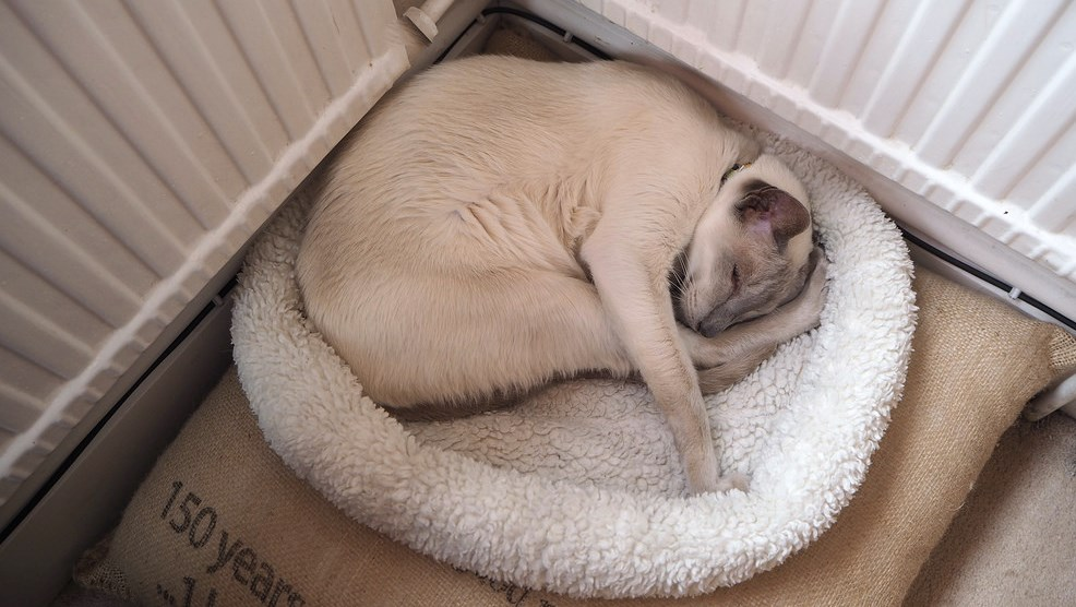 Cat sleeps in a comfortable bed at cattery