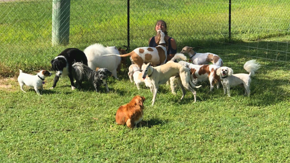 Large group of dogs play with Fur-Mum at Daycare
