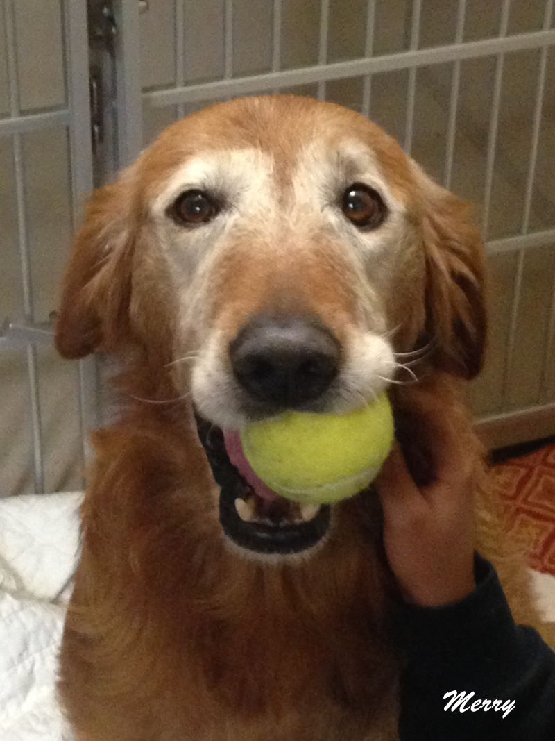 Merry-tennis-ball-patient-of-the-month