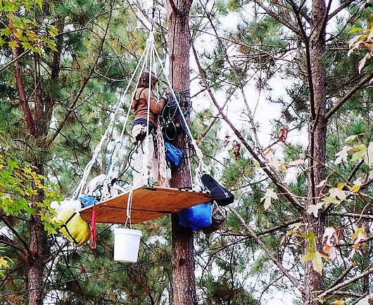 Tree sitter in the Piney Woods of north east Texas. (Credit: Tar Sands Blockade)