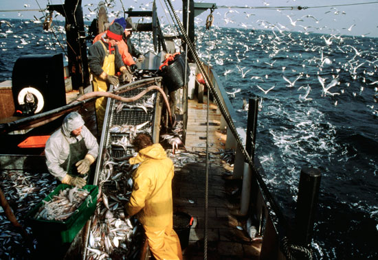 Commercial fishers (Credit: Tom Stewart/Corbis)