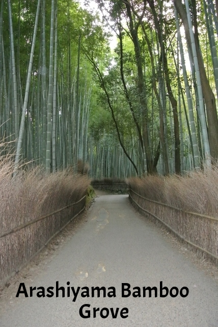 Path of Bamboo (3) (428x640).jpg
