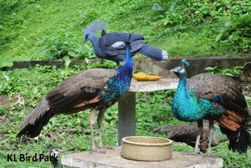KL Bird Park (11).JPG
