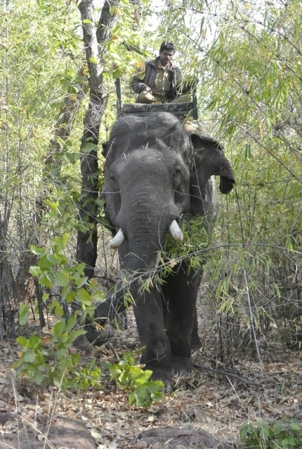 Bandhavgarh  Safari (1) (430x640).jpg