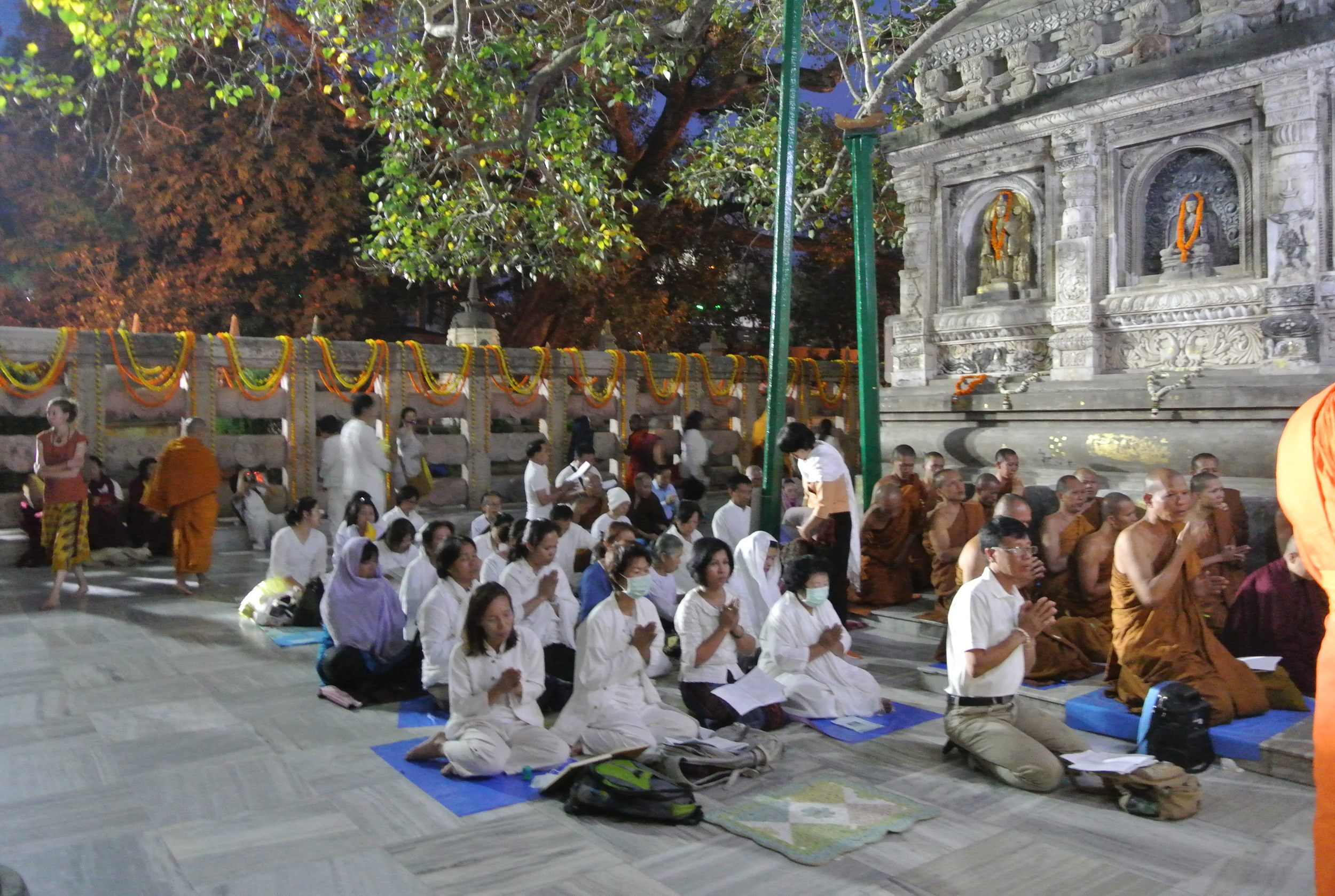 Monks and Thai Buddhist chanting by the Bodhi Tree at Maha Bodhi Temple