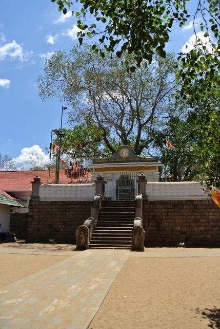 Anuradhapura - Sri Maha Bodhi  (3) (687x1024) (429x640).jpg