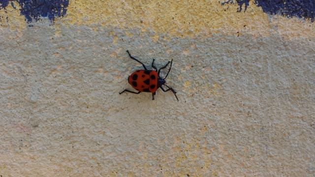 pretty bug (640x360).jpg