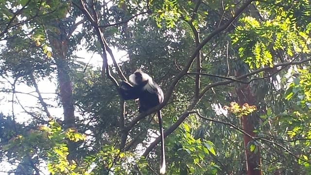 Nyungwe Forest (18) (640x360).jpg