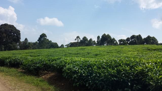 Nyungwe Forest (31) (640x360).jpg