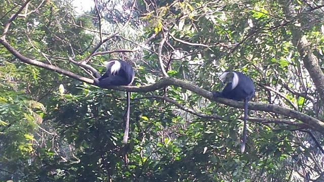 Nyungwe Forest (21) (640x360).jpg