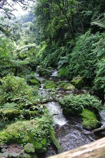 Nyungwe Forest (52) (428x640).jpg