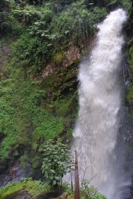 Nyungwe Forest (61) (428x640).jpg